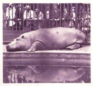 hipopotamo-300x279 Academia Esardi El Salvador
